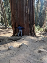 My vacation at Sequoia National Park